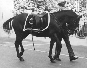Black Jack Riderless Horse