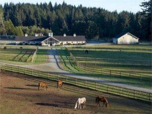 Baya's Farm